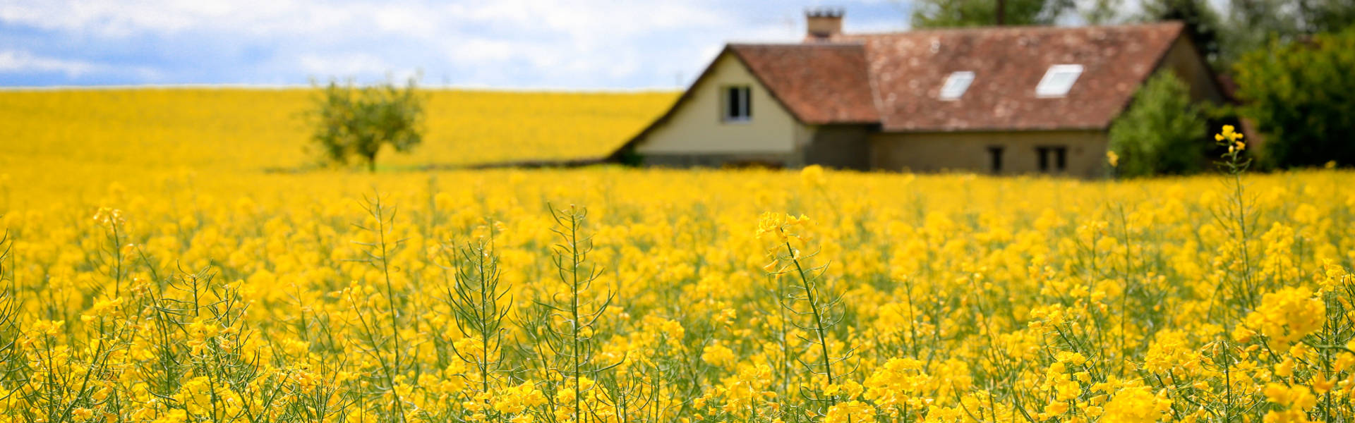 Flowers Barn